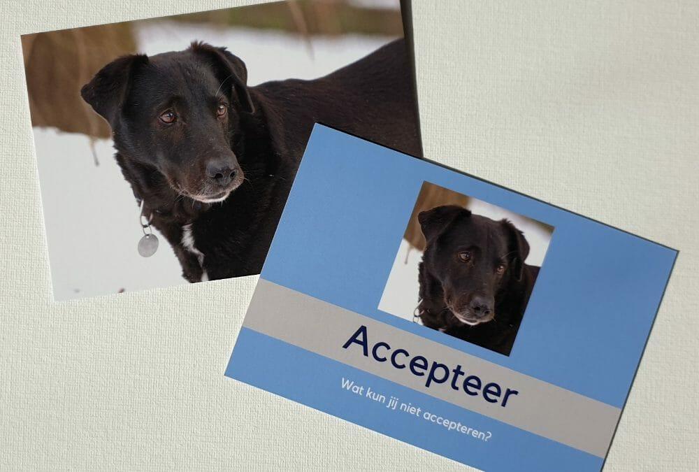 Accepteer